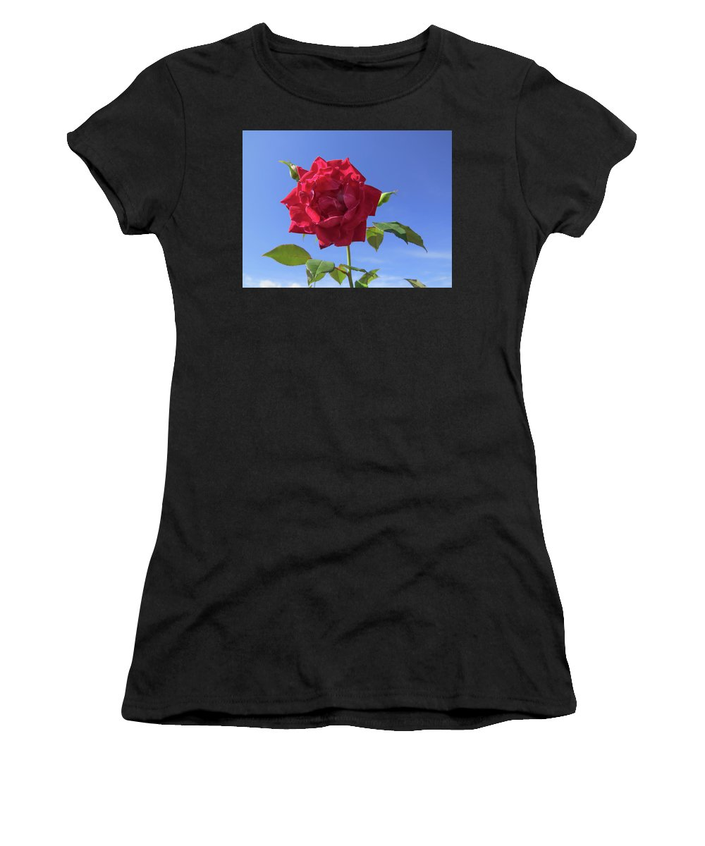 Rose Women's T-Shirt featuring the photograph Red On Blue by Zina Stromberg