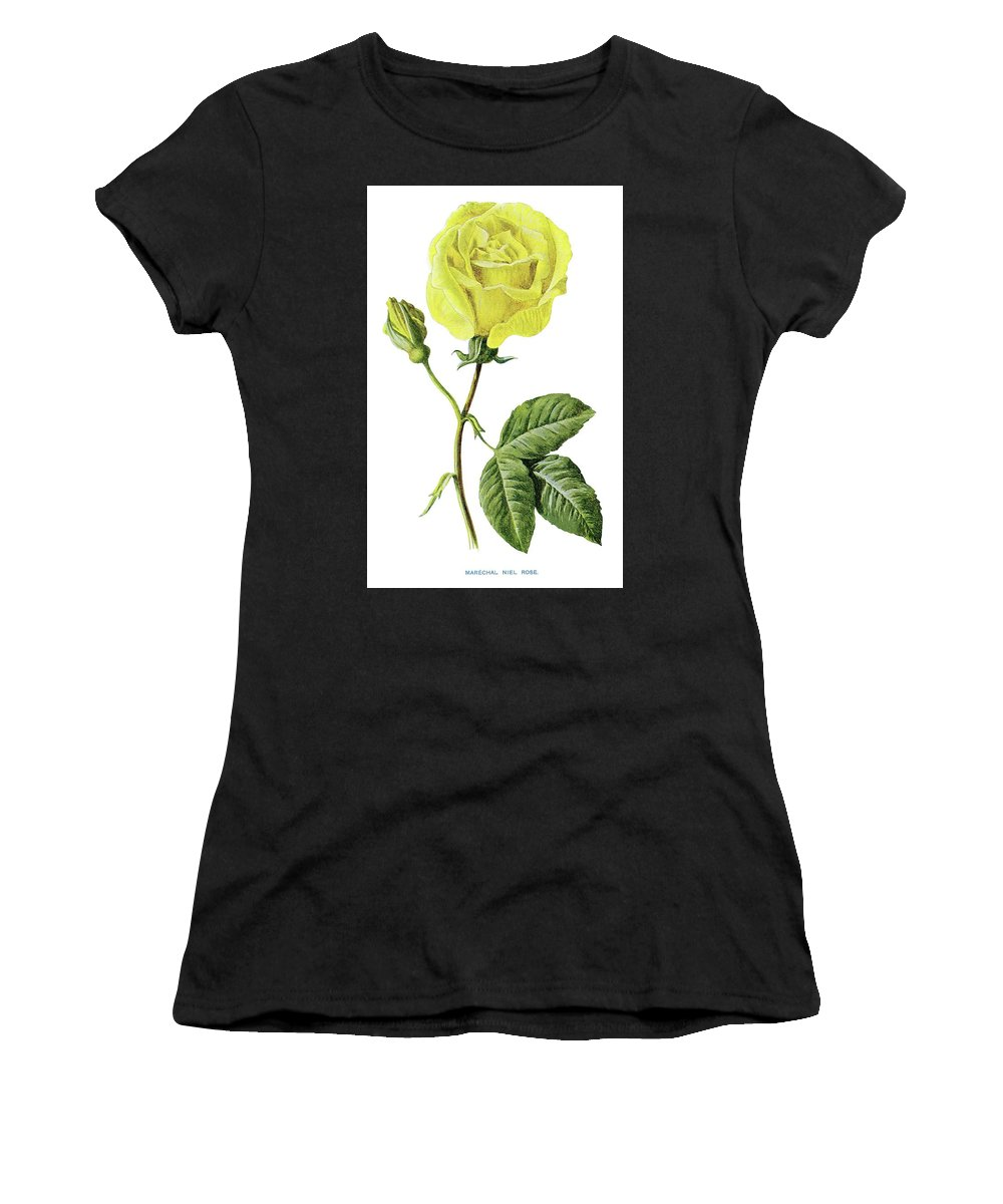 Marechal Niel Rose. Women's T-Shirt (Athletic Fit) featuring the painting Rose by Marechal