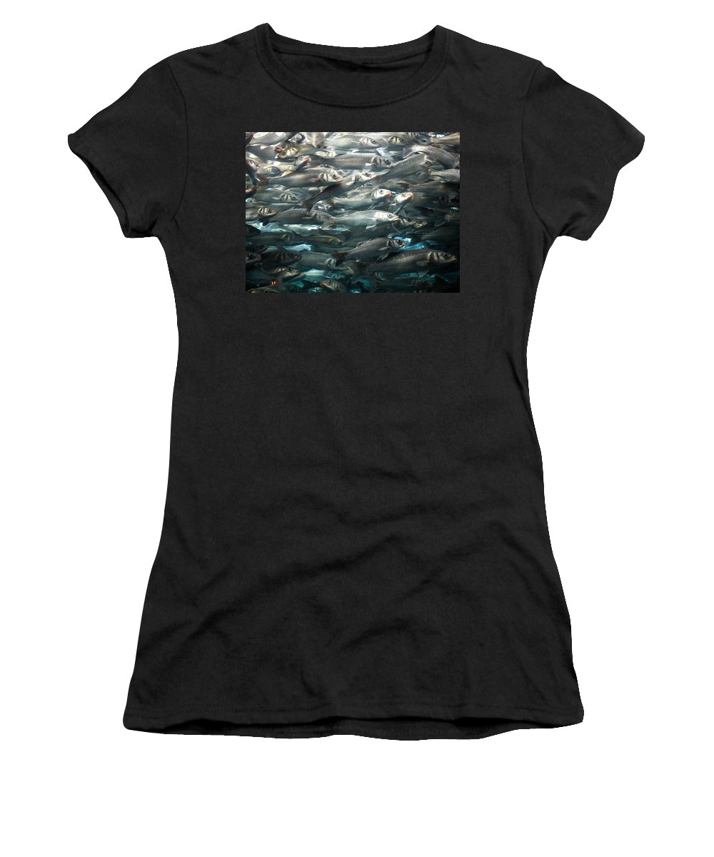 Loro Park Women's T-Shirt (Athletic Fit) featuring the photograph Sardines 1 by Jouko Lehto