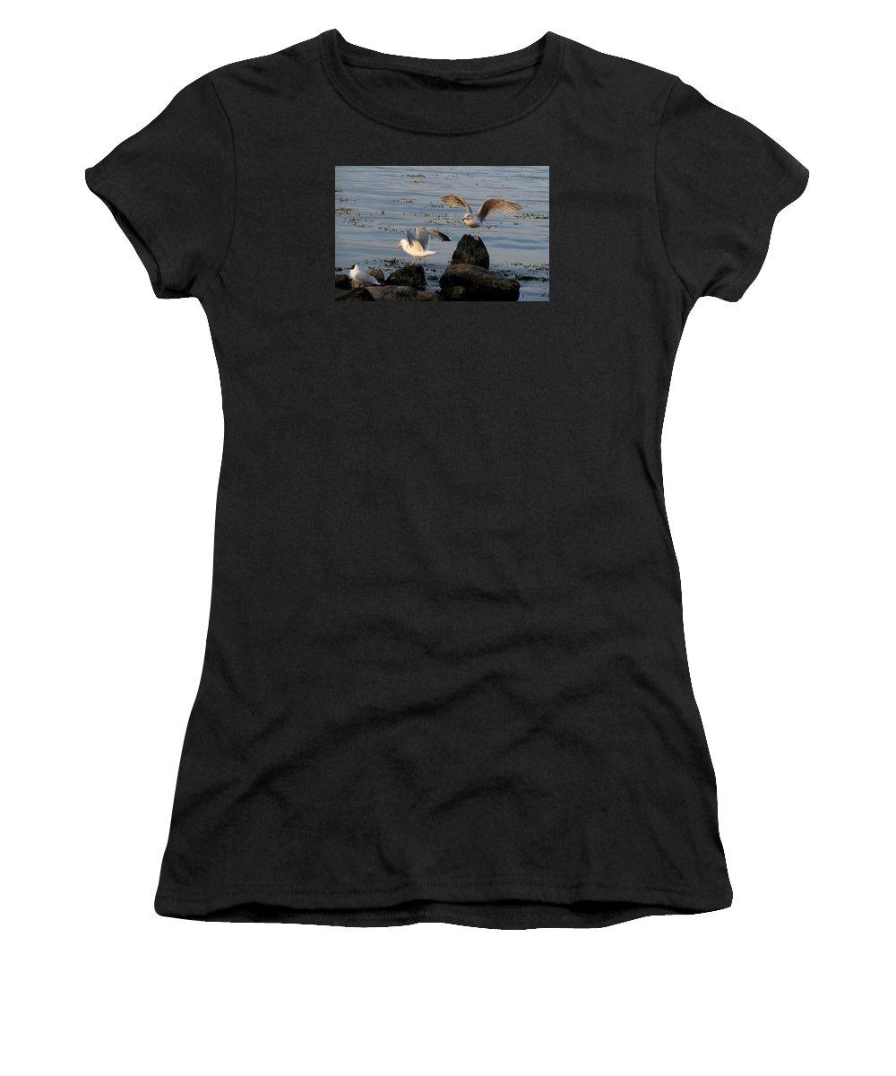 Birds Women's T-Shirt featuring the photograph Seaguls 3 by Cristina Rettegi