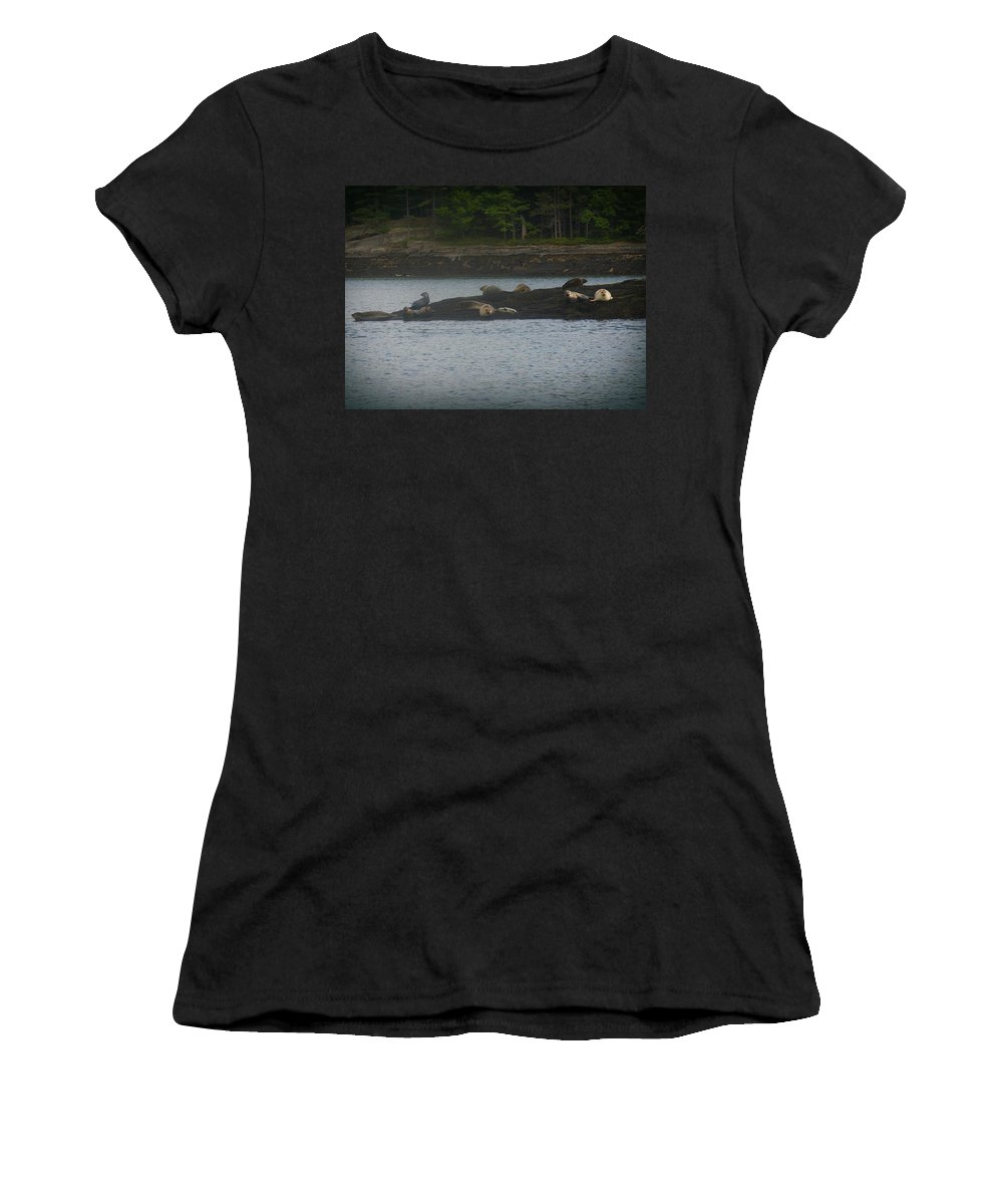 Seals Women's T-Shirt (Athletic Fit) featuring the photograph Seal Series 8 by Amy-Elizabeth Toomey