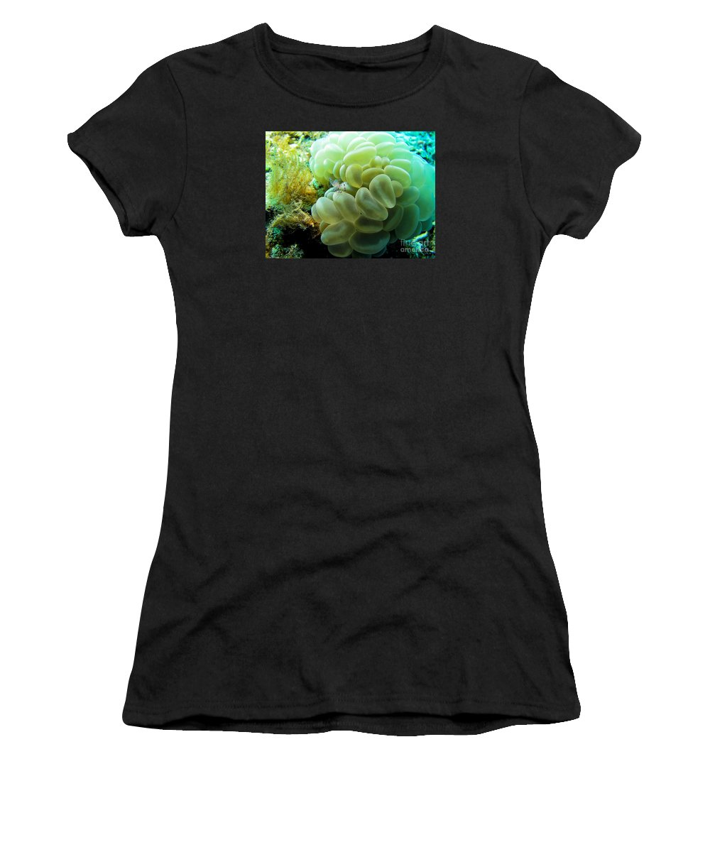 Coral Women's T-Shirt (Athletic Fit) featuring the photograph Shrimp On Soft Coral by Dan Norton