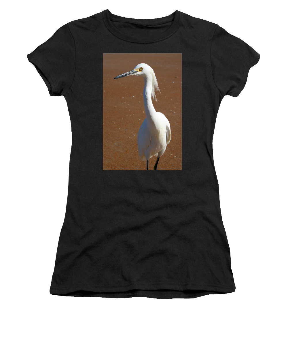 Bird Beach Sand White Bright Yellow Curious Egret Long Neck Feather Eye Ocean Women's T-Shirt (Athletic Fit) featuring the photograph Snowy Egret by Andrei Shliakhau