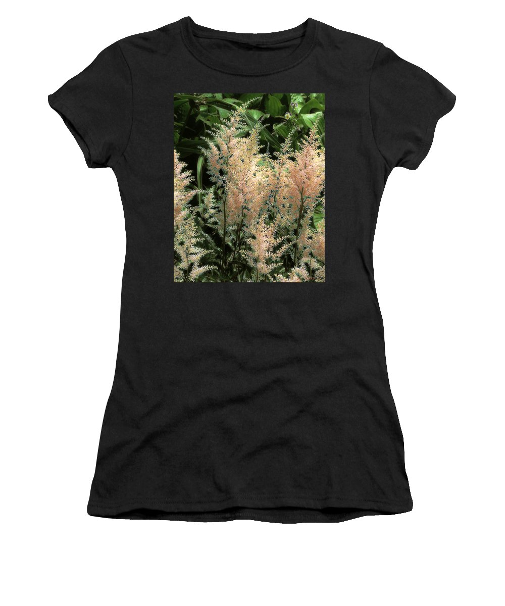 Astilbe Women's T-Shirt featuring the painting Spikes Sunkissed by RC DeWinter