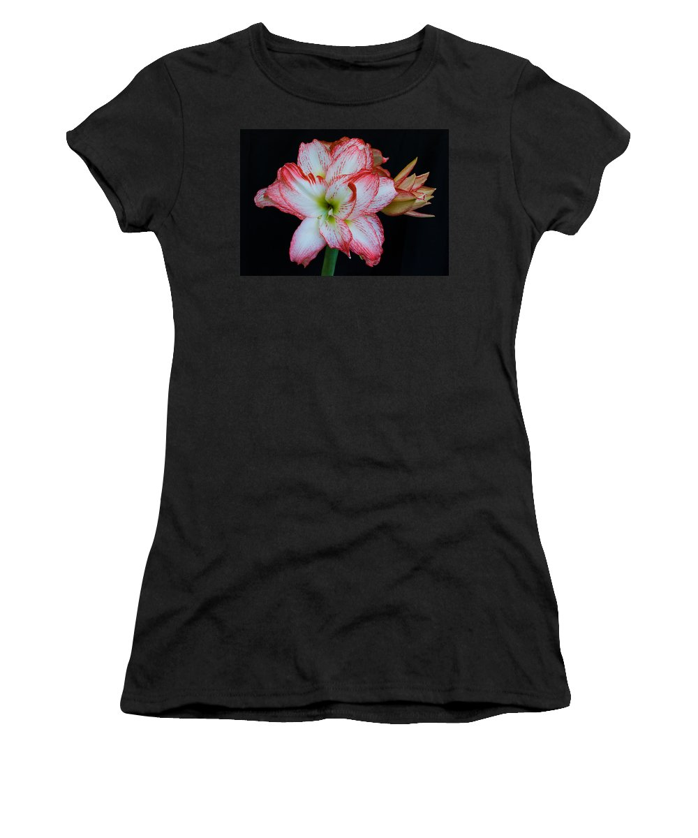 Amaryllis; Flower; Bloom; Blossom; Springtime; Spring; March; Stem. Bulb; Plant; Wildflower; Black; Women's T-Shirt (Athletic Fit) featuring the photograph Springtime Florida Amaryllis by Allan Hughes
