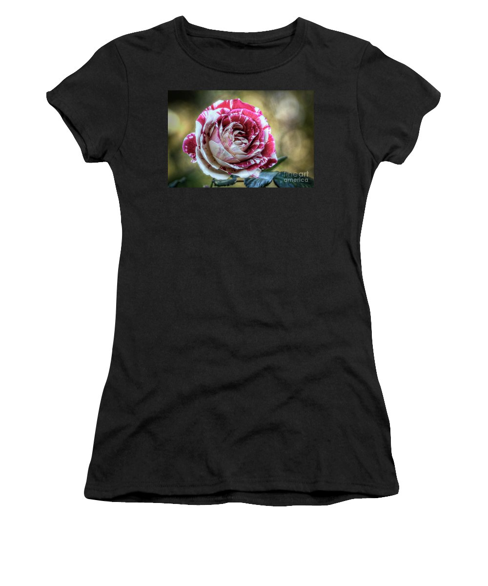 Rose Women's T-Shirt (Athletic Fit) featuring the photograph Striped Rose by Saija Lehtonen