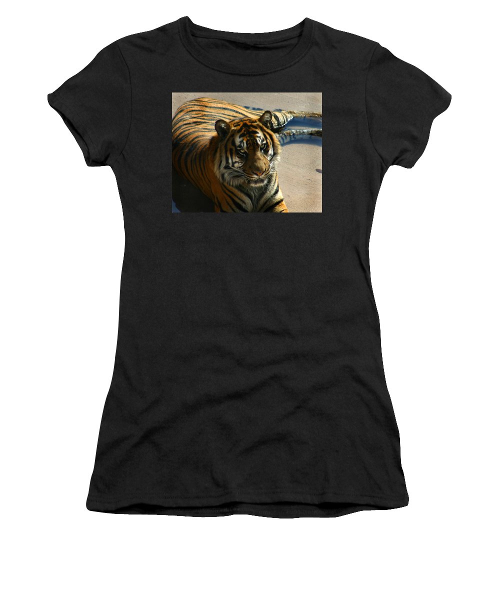Tiger Women's T-Shirt featuring the photograph Sumatran Tiger by Anthony Jones
