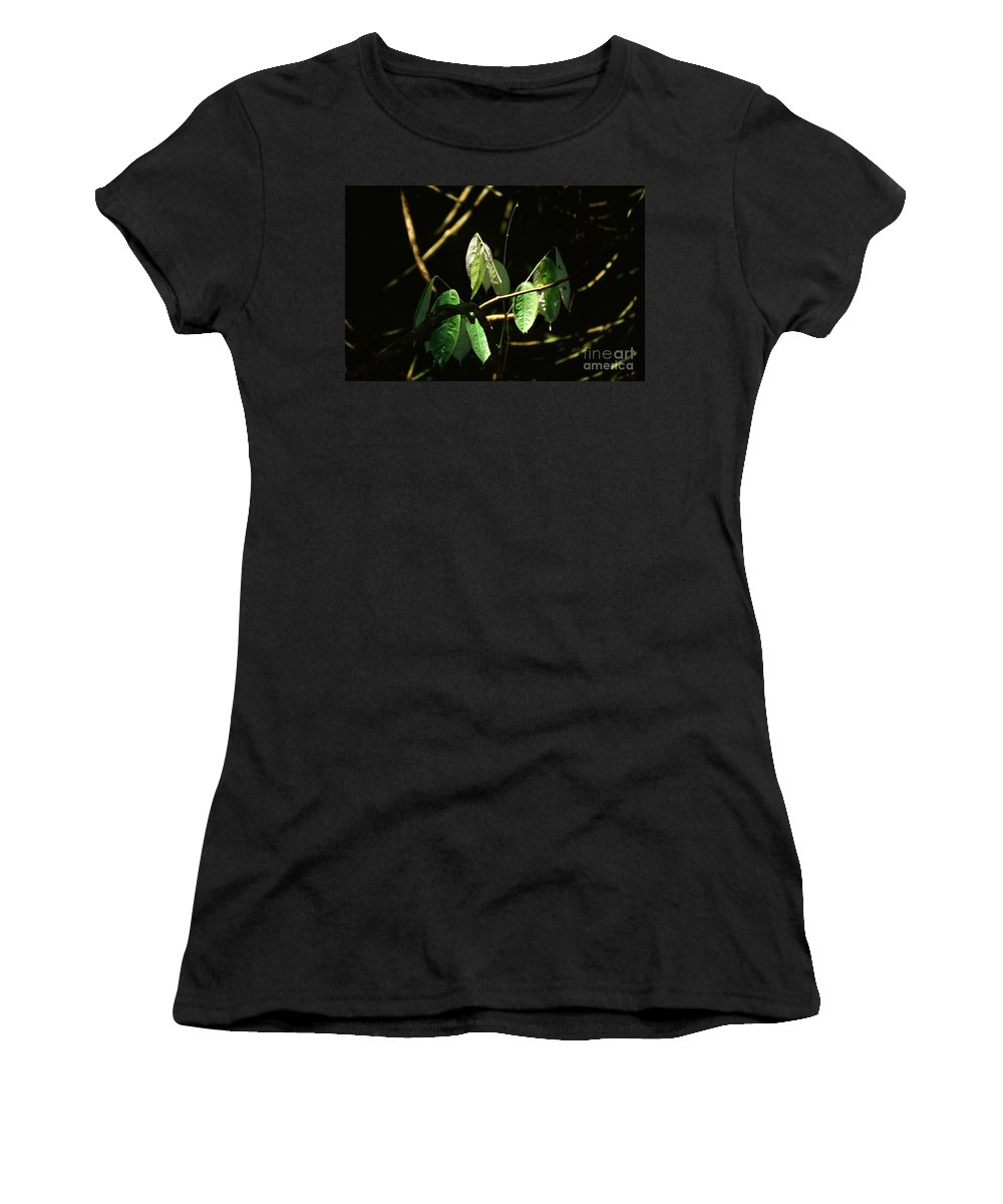 Leaves Women's T-Shirt (Athletic Fit) featuring the photograph Sunlit Leaves by Kathy McClure