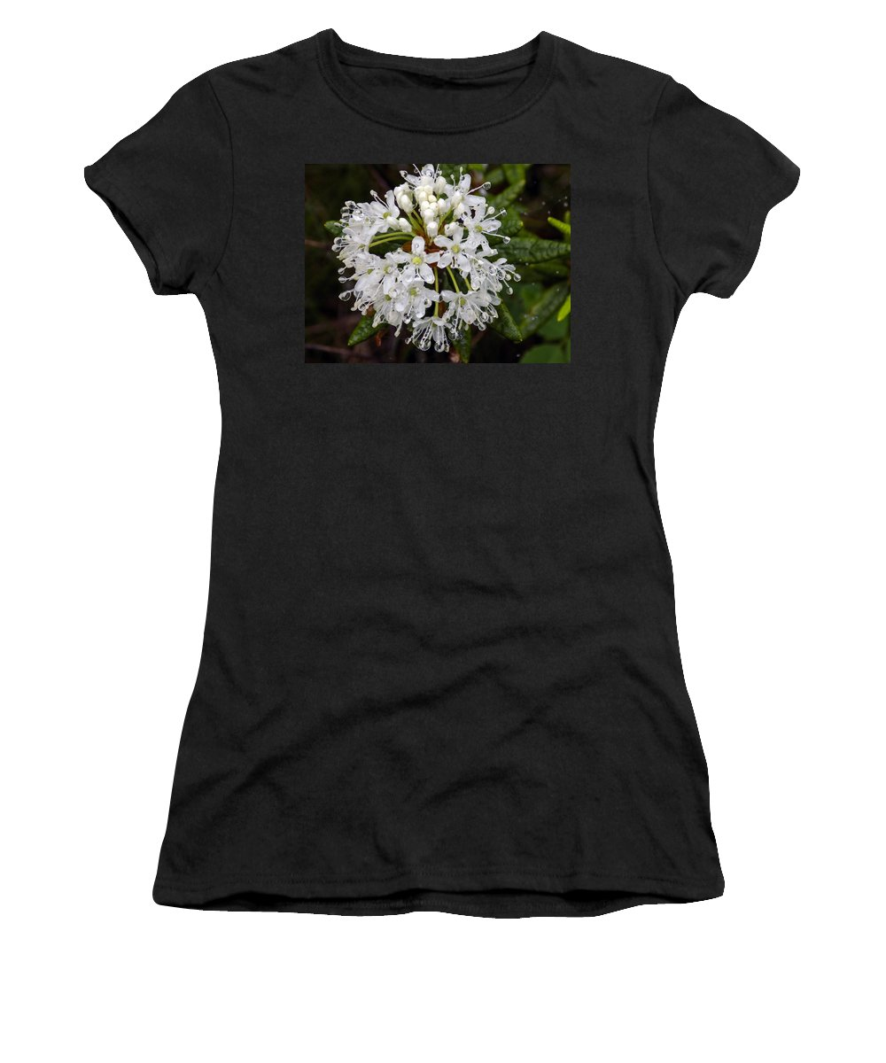 Macro Women's T-Shirt featuring the photograph Sunshine On A Rainy Day by William Tasker