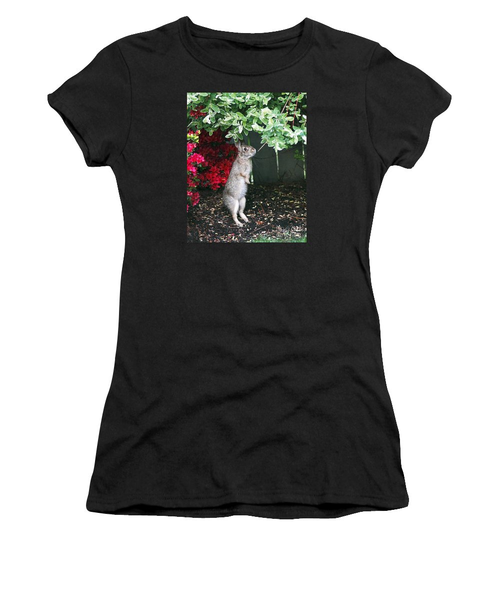 Rabbit Women's T-Shirt (Athletic Fit) featuring the photograph Surveying Next Leafy Meal by Marland Howard