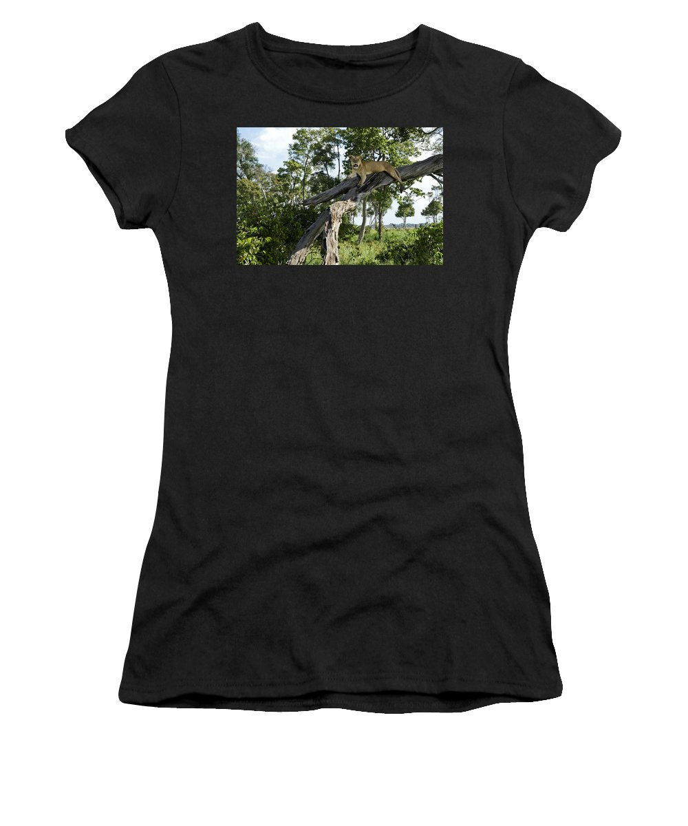 Africa Women's T-Shirt featuring the photograph Surveying The Plains by Michele Burgess