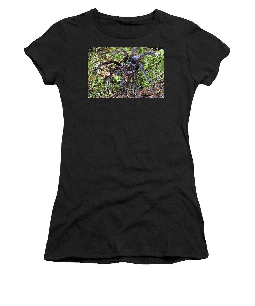 Fn Women's T-Shirt featuring the photograph Tarantula Pamphobeteus Sp Male, Mindo by James Christensen