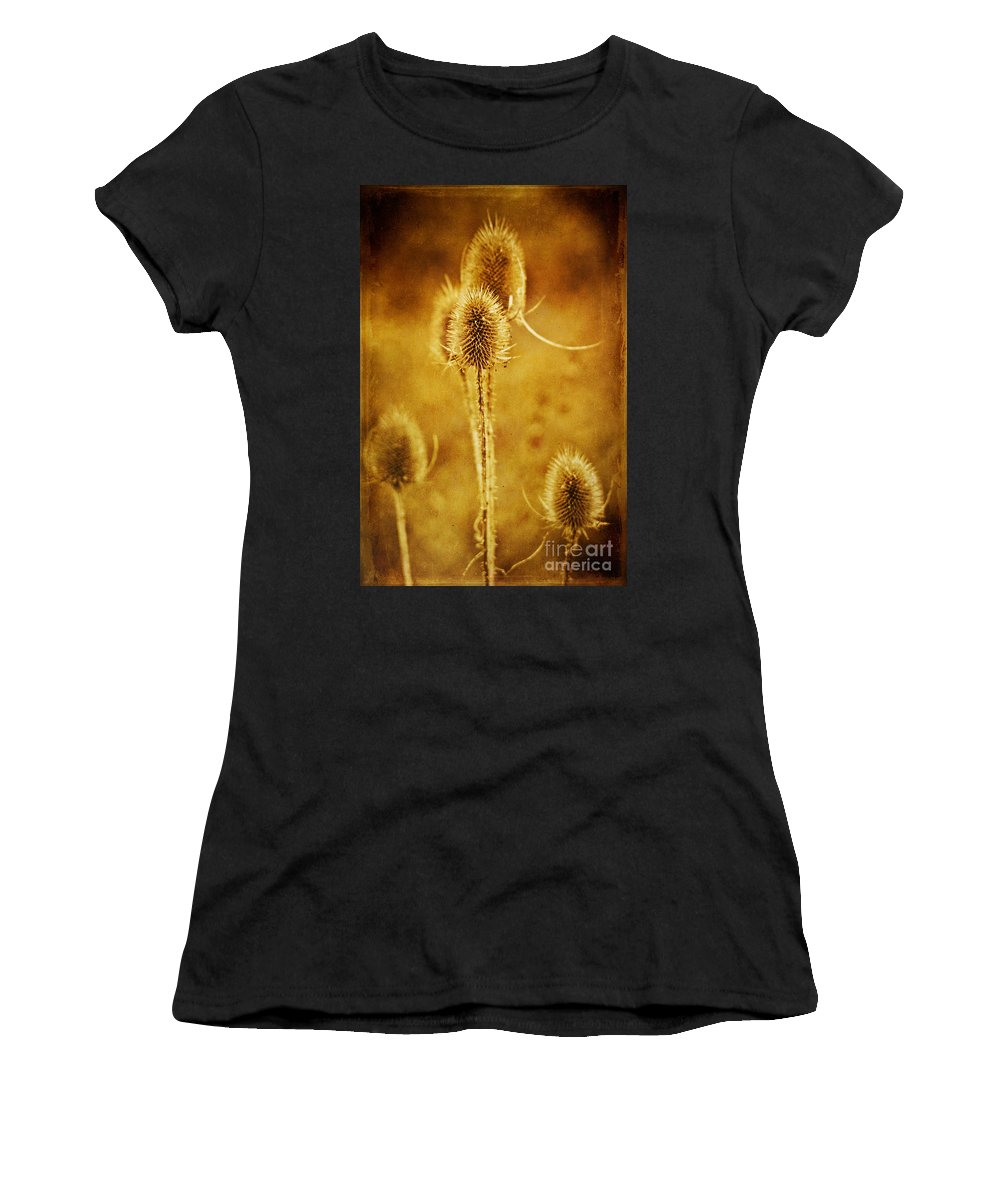 Teasel Women's T-Shirt (Athletic Fit) featuring the photograph Teasel Group by John Edwards