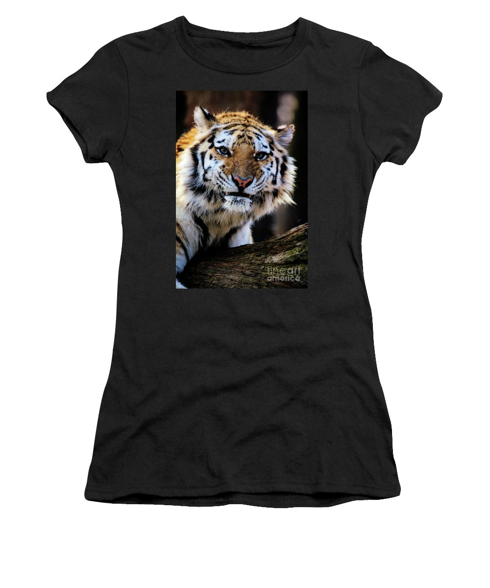 Tiger Women's T-Shirt (Athletic Fit) featuring the photograph That Tiger Look by Karol Livote