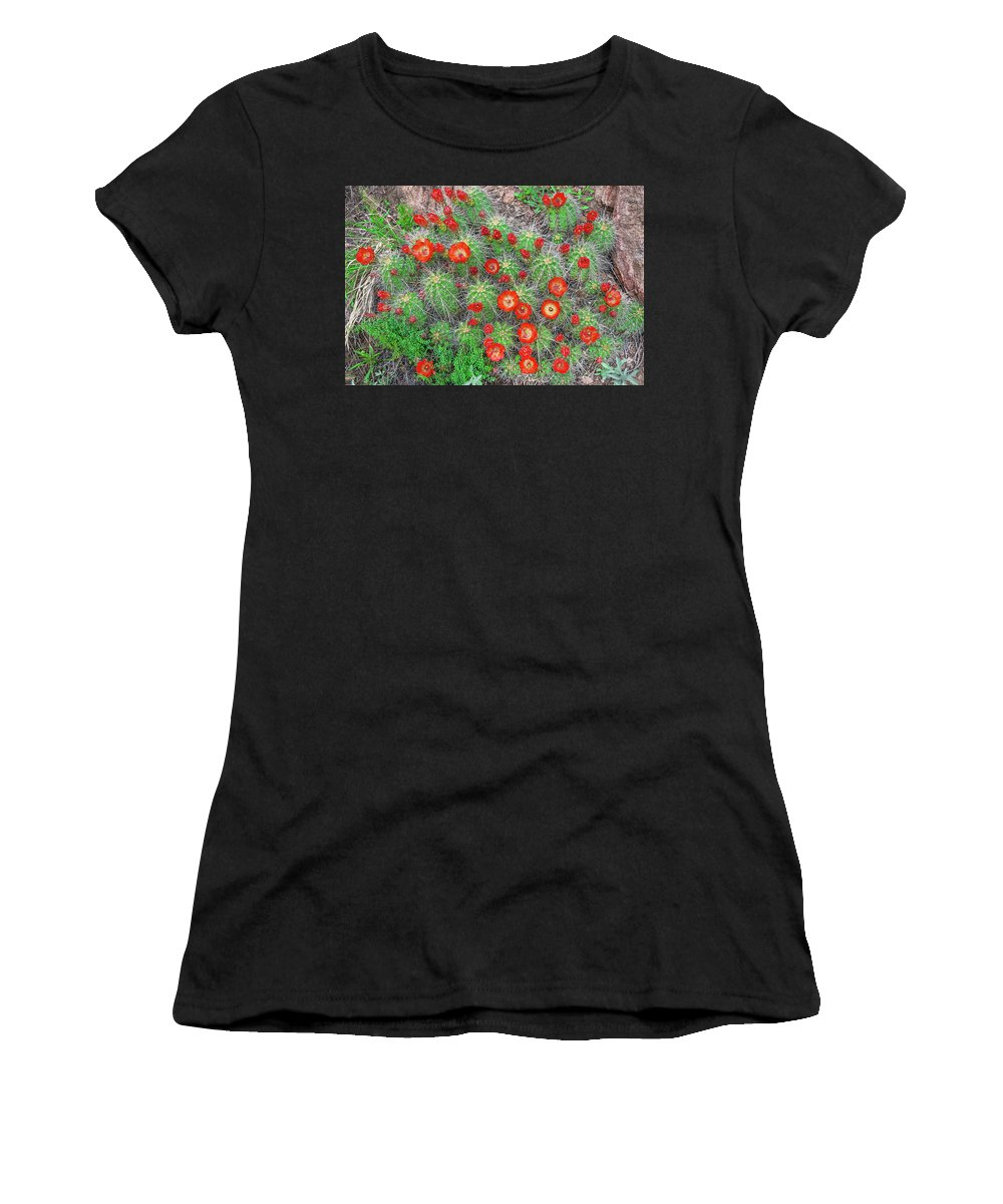 Claret Cup Cacti Women's T-Shirt (Athletic Fit) featuring the photograph The First Week Of May, Claret Cup Cacti Begin To Bloom Throughout The Colorado Rockies. by Bijan Pirnia