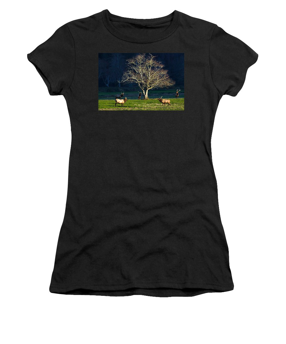 Bull Elk Women's T-Shirt (Athletic Fit) featuring the photograph The Gathering by Randall Ingalls