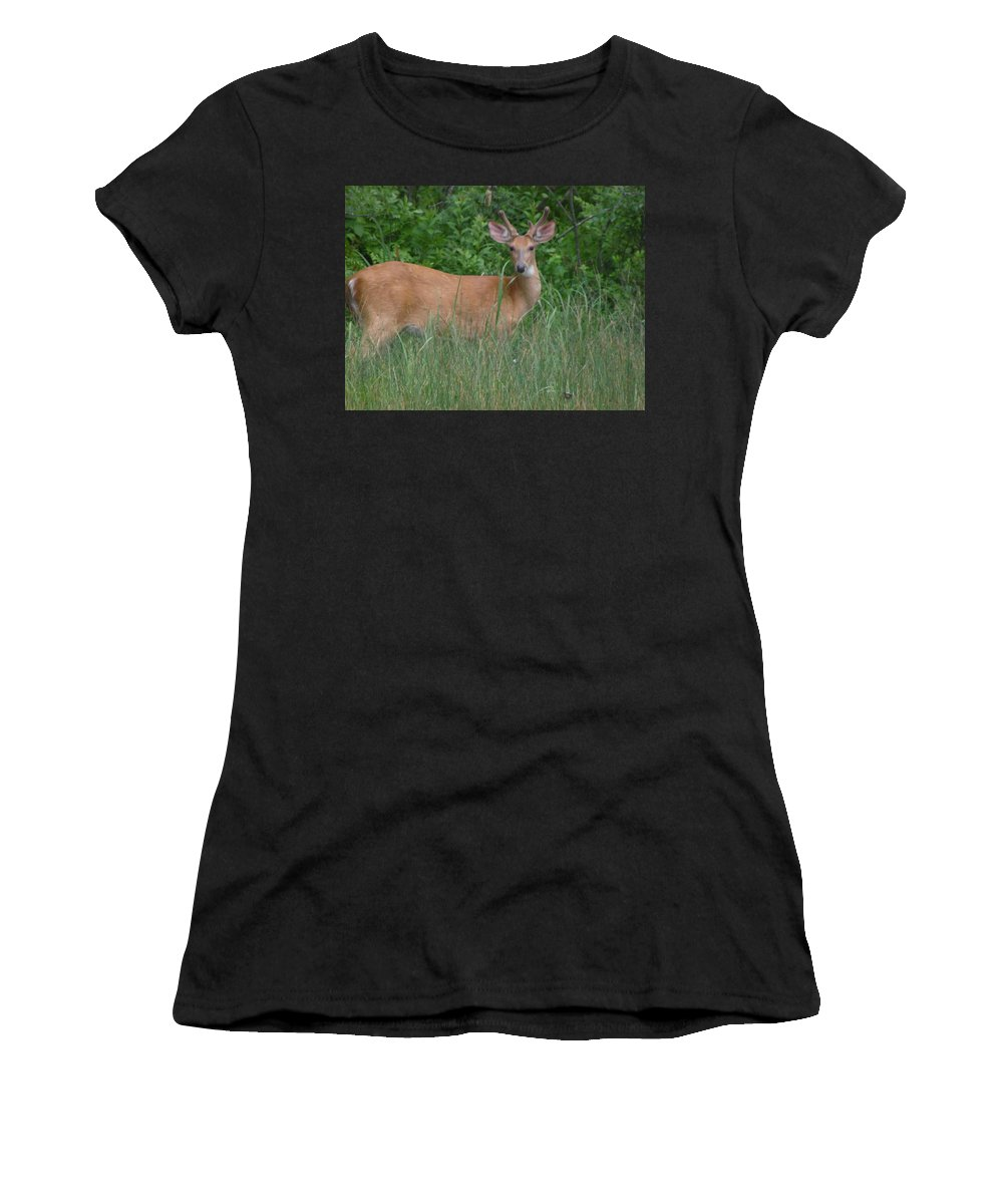 Wildlife Women's T-Shirt (Athletic Fit) featuring the photograph The Prince by Julie Houle