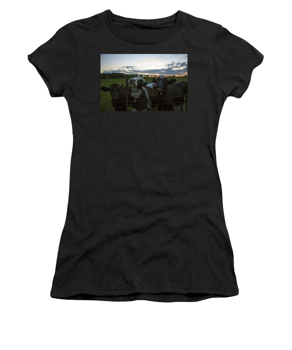 Cow Women's T-Shirt featuring the photograph Three Wisconsin Maidens by Scott Perkins
