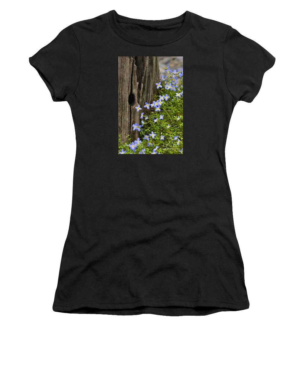 Houstonia. Serpyllifolia. Thyme-leaved Women's T-Shirt (Athletic Fit) featuring the photograph Thyme-leaved Bluets - D008426 by Daniel Dempster