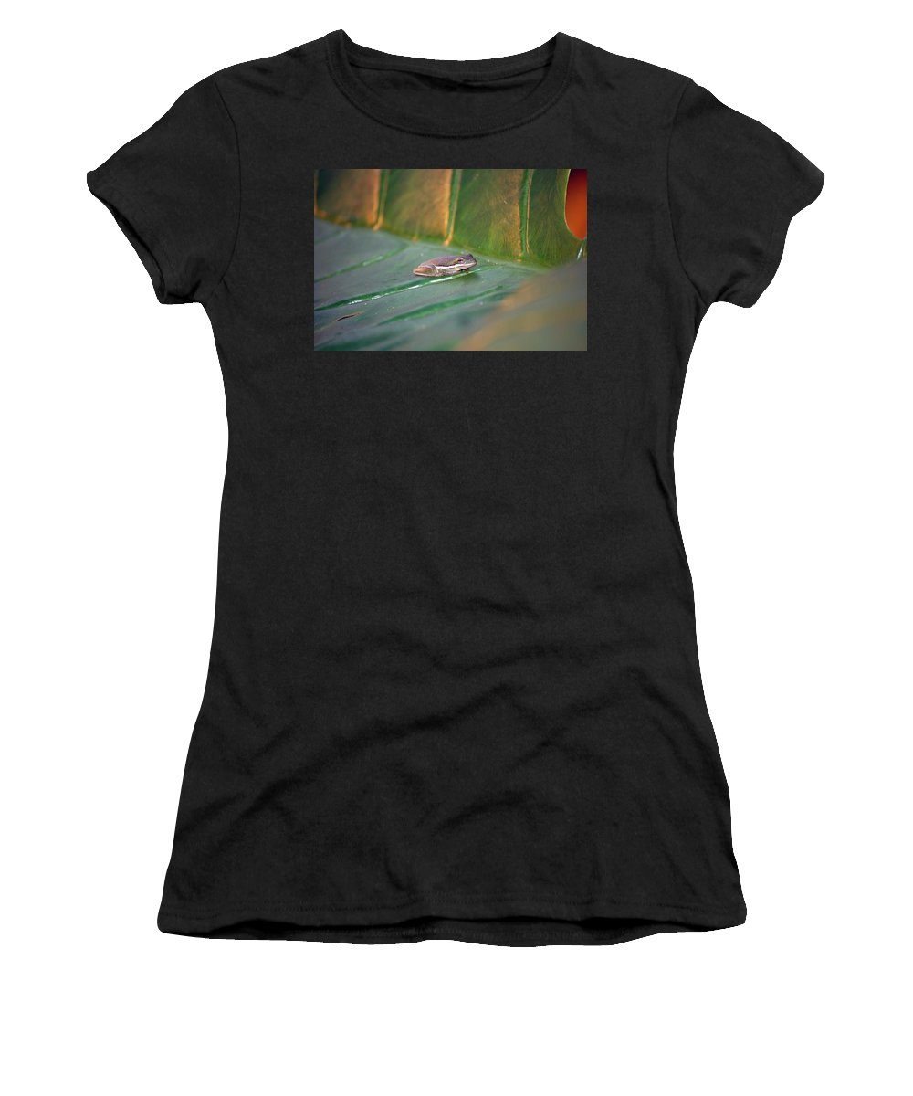 Frog Women's T-Shirt (Athletic Fit) featuring the photograph Tree Frog IIi by Robert Meanor