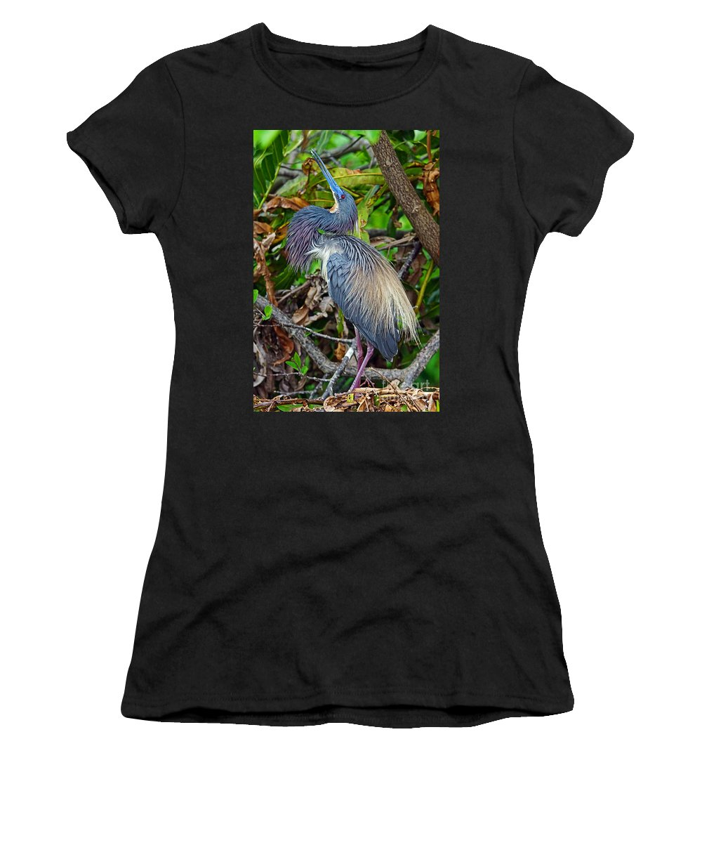Bird Women's T-Shirt featuring the photograph Tricolor Breeding Display by Larry Nieland