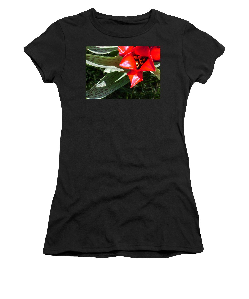 Tulip Women's T-Shirt (Athletic Fit) featuring the photograph Tulip by Steve Karol