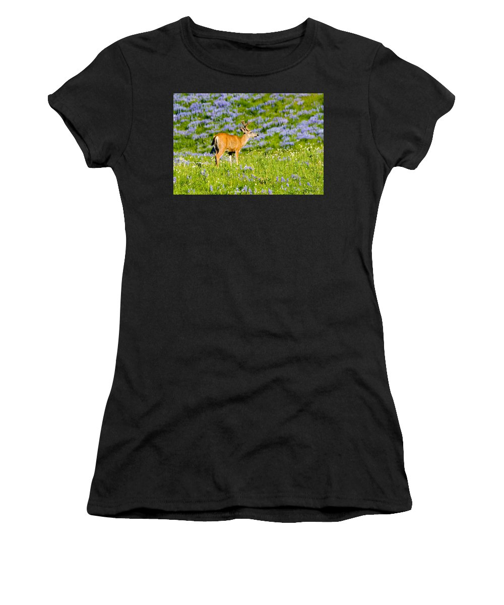 Deer Women's T-Shirt (Athletic Fit) featuring the photograph Velvet On Lupine by Mike Dawson