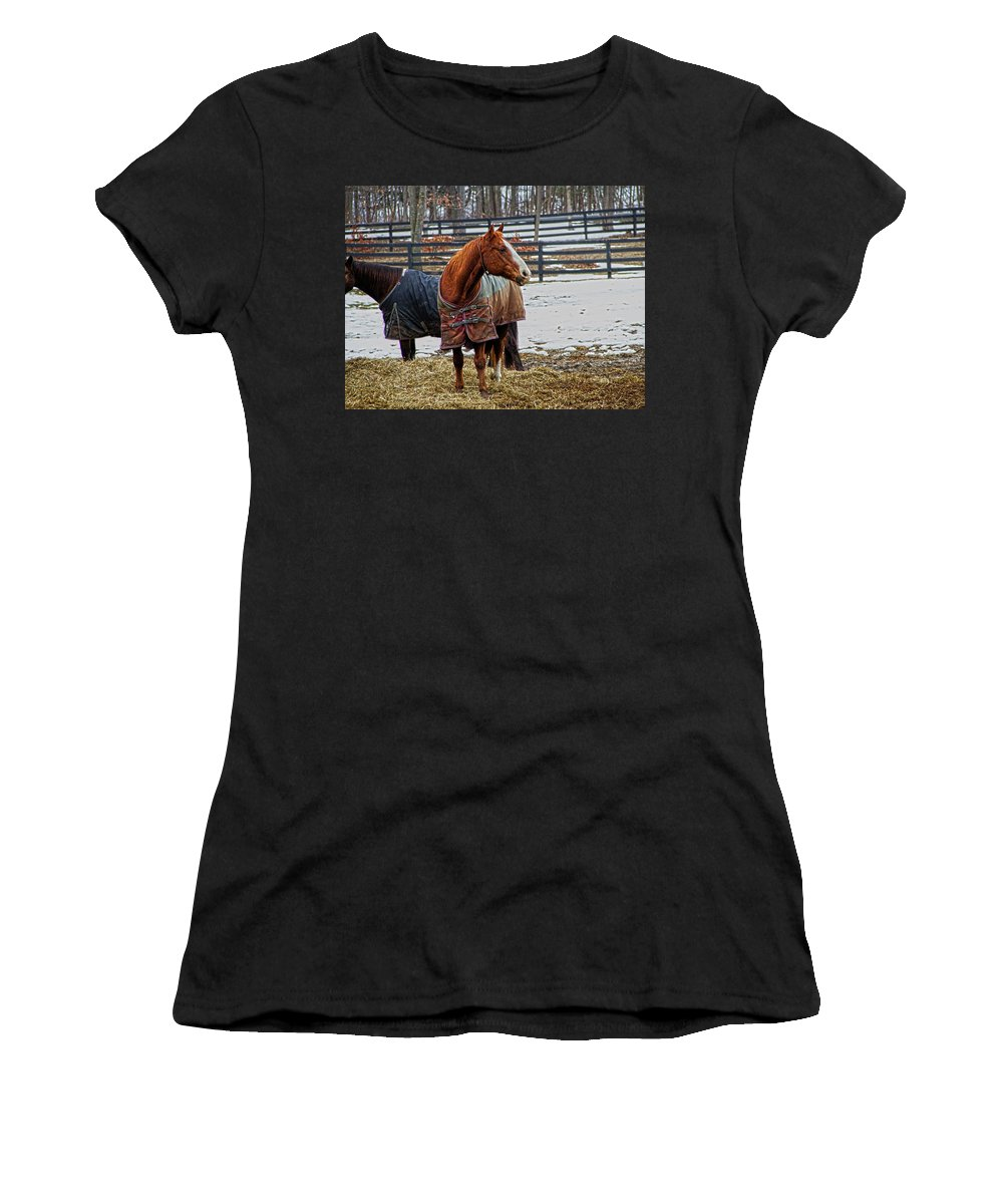 Horses Women's T-Shirt (Athletic Fit) featuring the photograph What A Ham by Donald Crosby