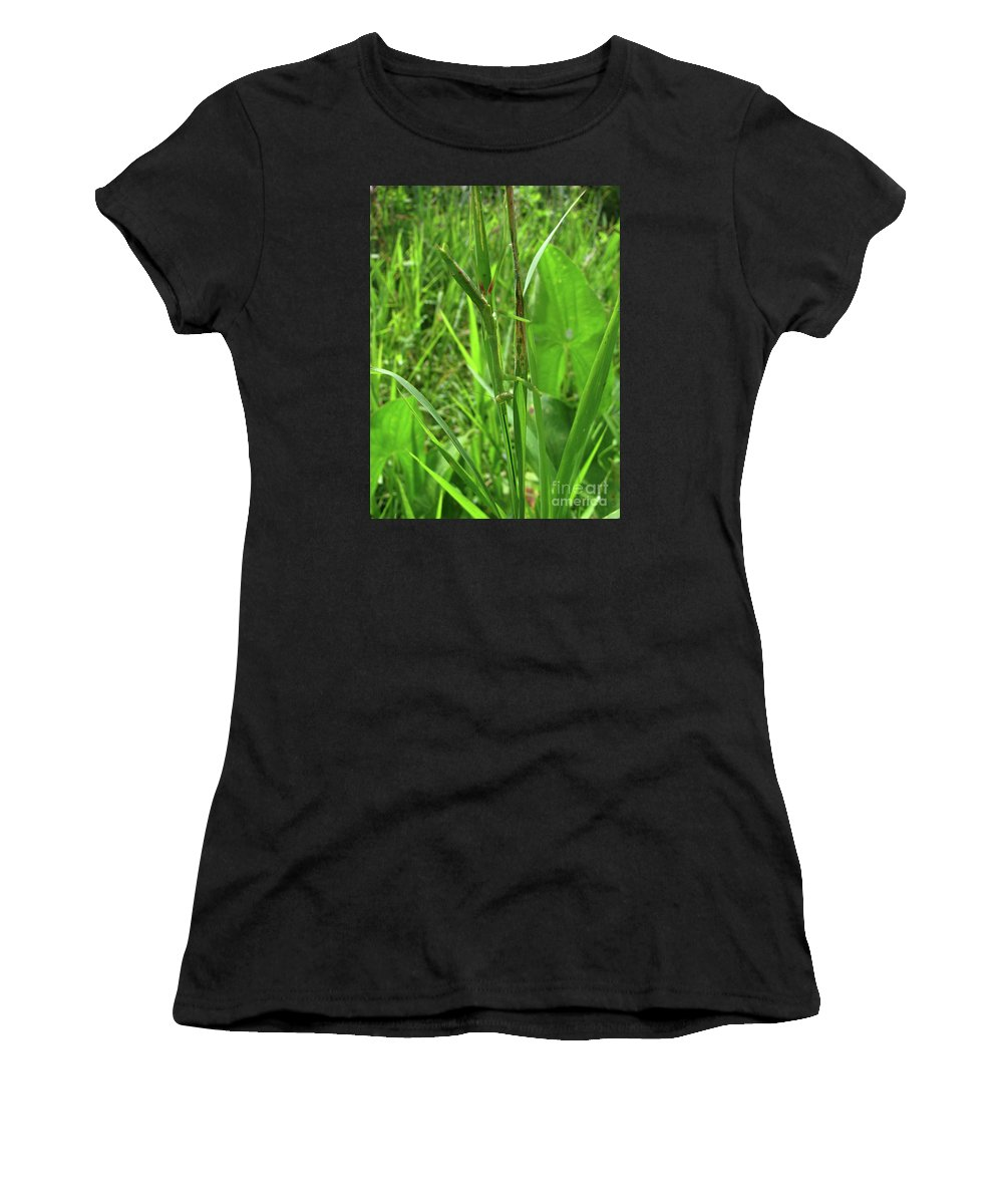 Insect Women's T-Shirt (Athletic Fit) featuring the photograph Where Am I by Donna Brown
