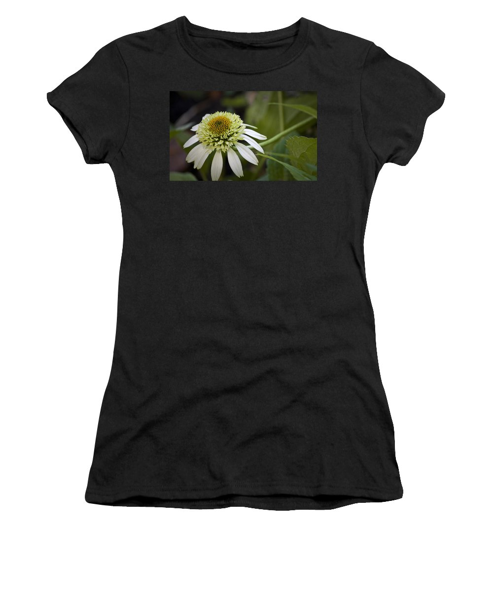 White Women's T-Shirt (Athletic Fit) featuring the photograph White Milkshake Coneflower by Teresa Mucha