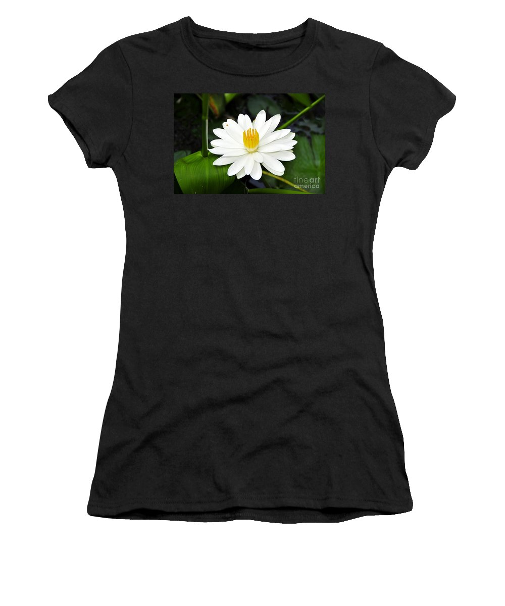 White Women's T-Shirt featuring the photograph White Wonder by David Lee Thompson