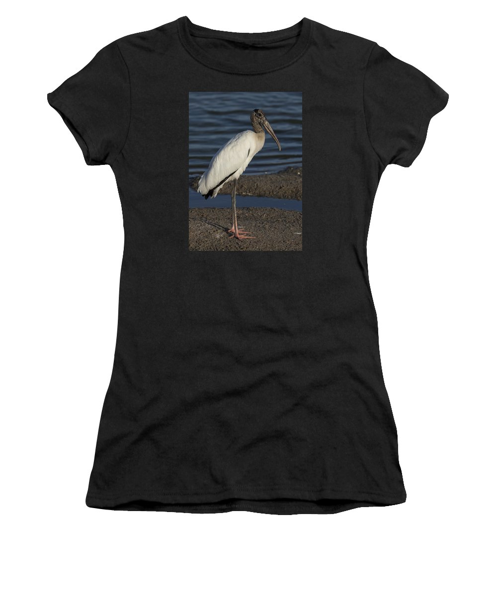 Wood Women's T-Shirt (Athletic Fit) featuring the photograph Wood Stork In The Final Light Of Day by David Watkins