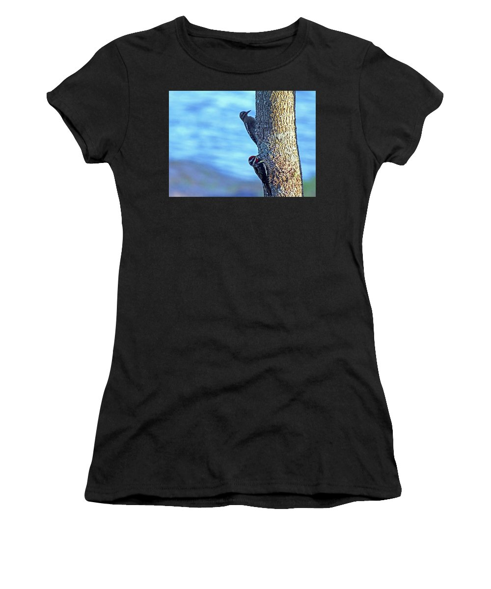 Yellow Bellied Sapsucker Women's T-Shirt (Athletic Fit) featuring the photograph Yellow Bellied Sapsucker by Debbie Oppermann