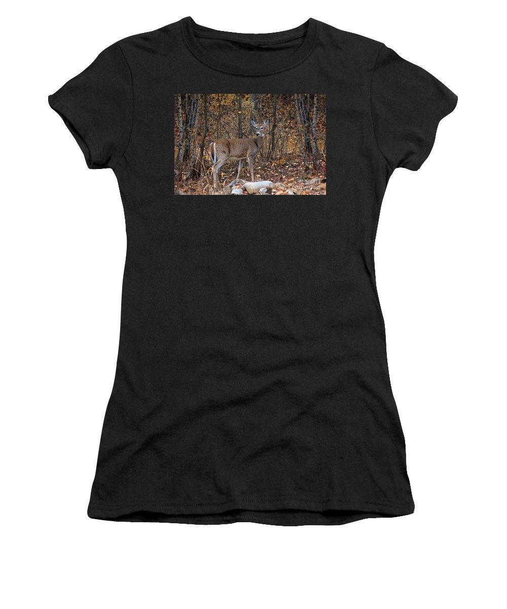 Deer Women's T-Shirt (Athletic Fit) featuring the photograph Young Deer by Karen Goodwin