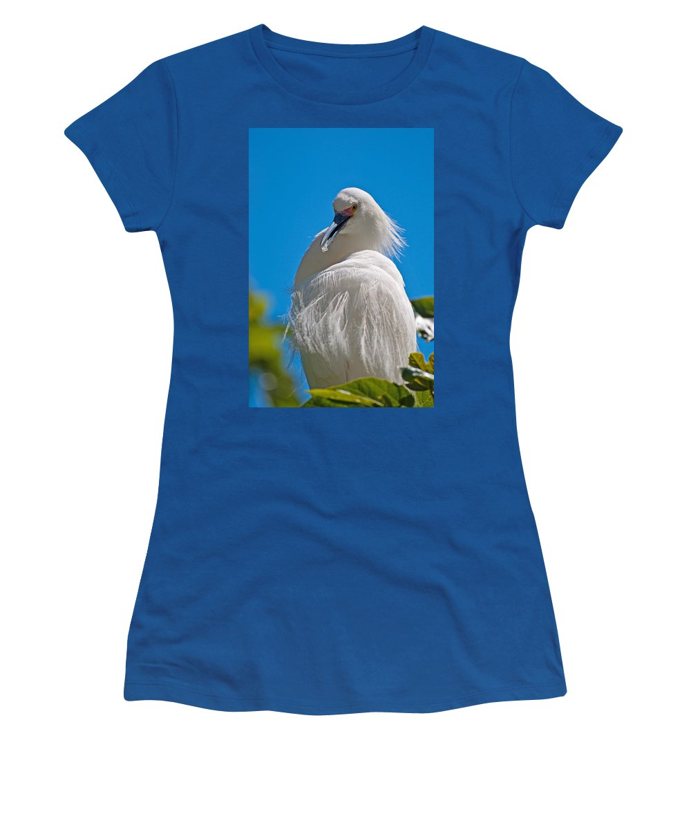 Snowy Egret Women's T-Shirt featuring the photograph Snowy Egret by Donna Doherty