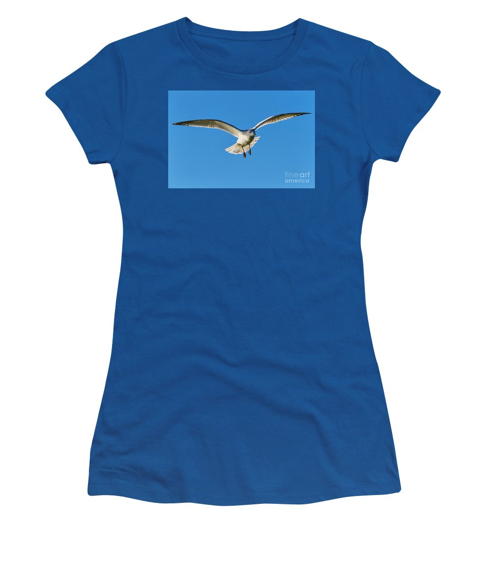 Gull Women's T-Shirt featuring the photograph Soaring by Susie Peek