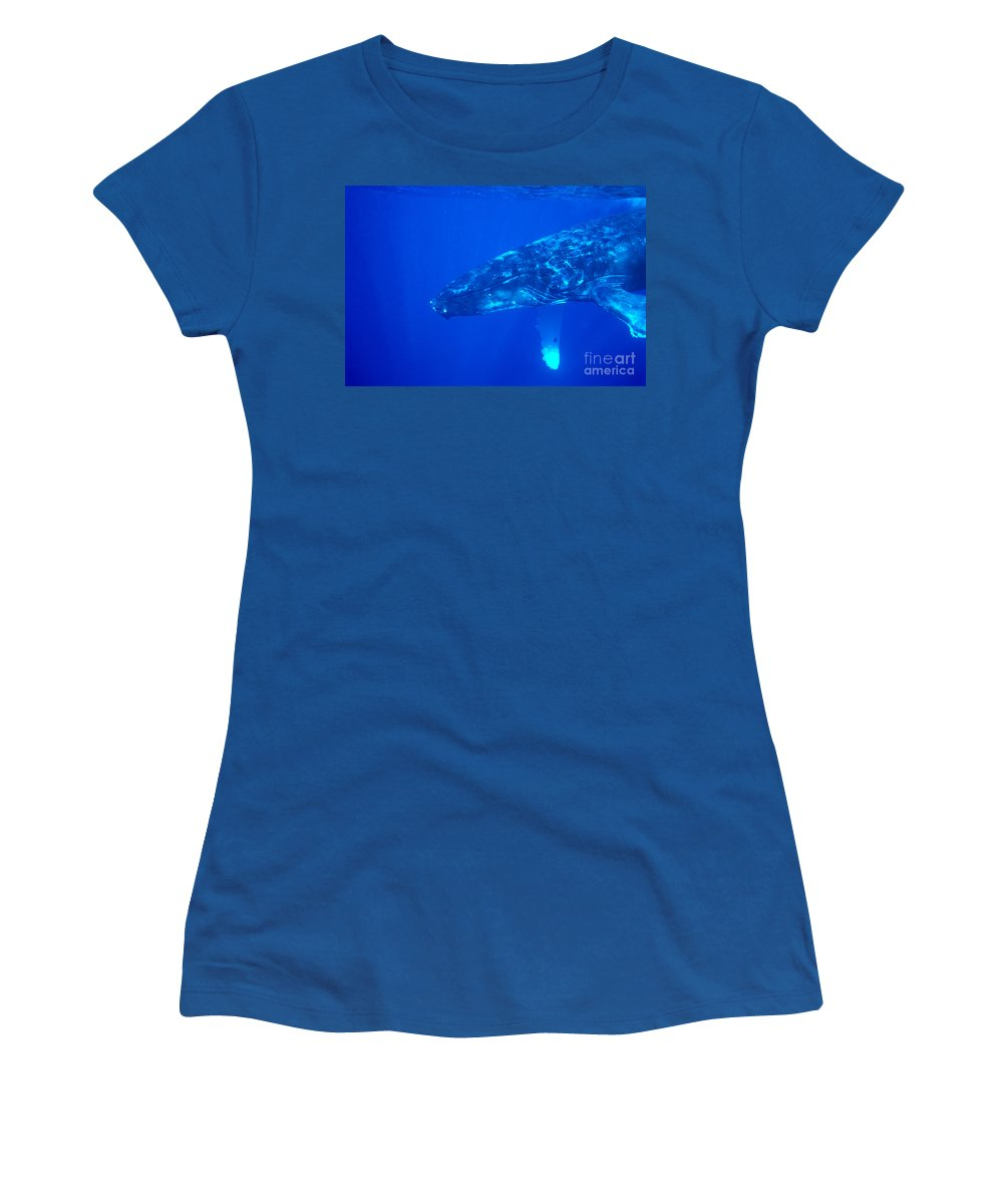 Amaze Women's T-Shirt featuring the photograph Humpback Whale by Dave Fleetham - Printscapes