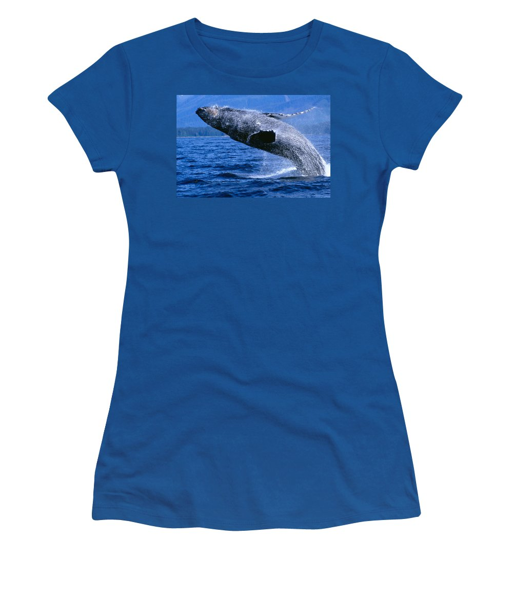 Animal Art Women's T-Shirt featuring the photograph Humpback Full Breach by John Hyde - Printscapes