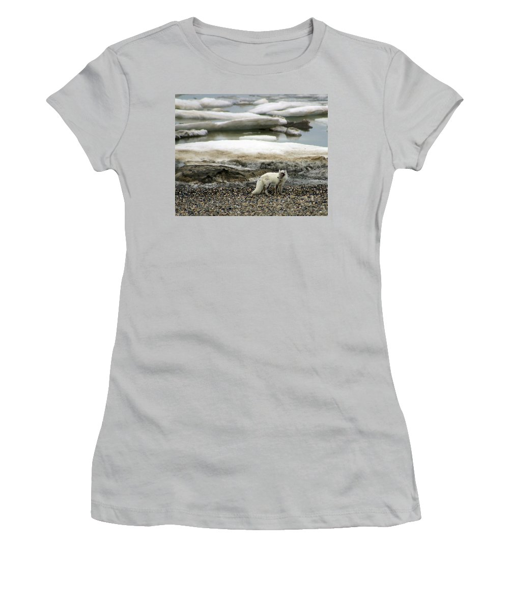 Fox Women's T-Shirt (Athletic Fit) featuring the photograph Arctic Fox By Frozen Ocean by Anthony Jones