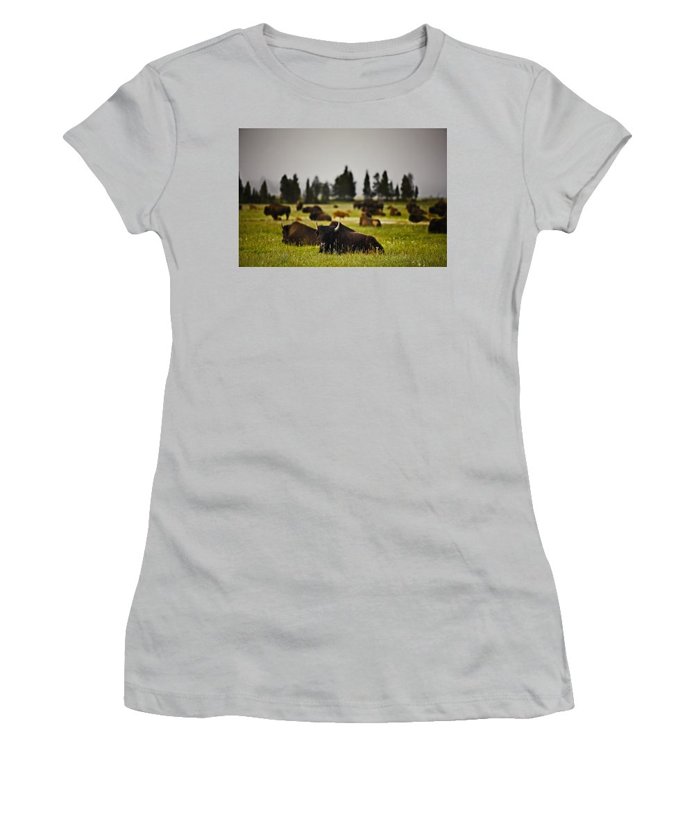 Nature Women's T-Shirt (Athletic Fit) featuring the photograph Foggy Herd by John K Sampson
