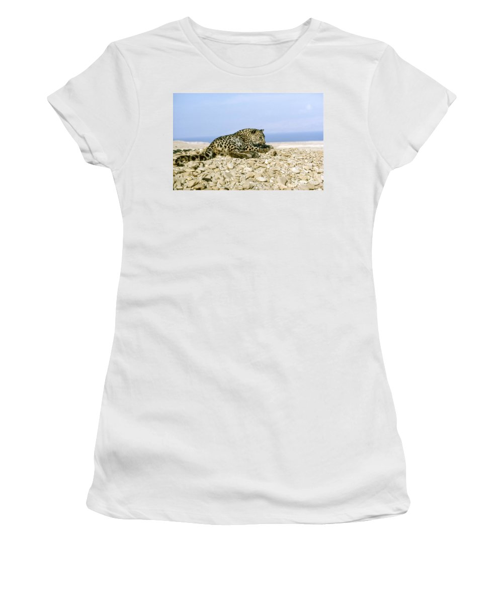 Leopard Women's T-Shirt featuring the photograph Arabian Leopard Panthera Pardus 1 by Eyal Bartov