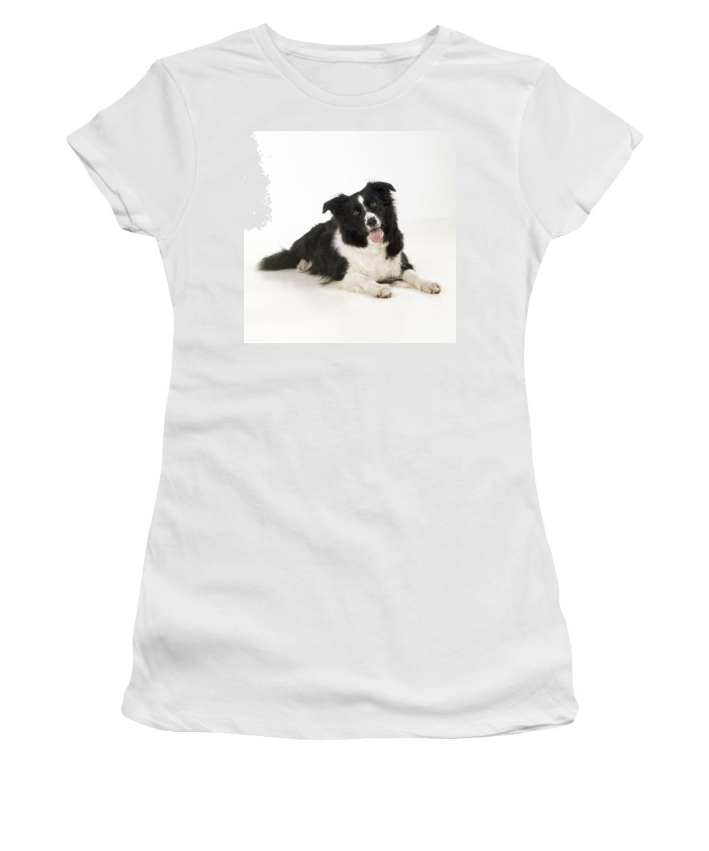 Border Collie Women's T-Shirt (Athletic Fit) featuring the photograph Border Collie Dog by John Daniels