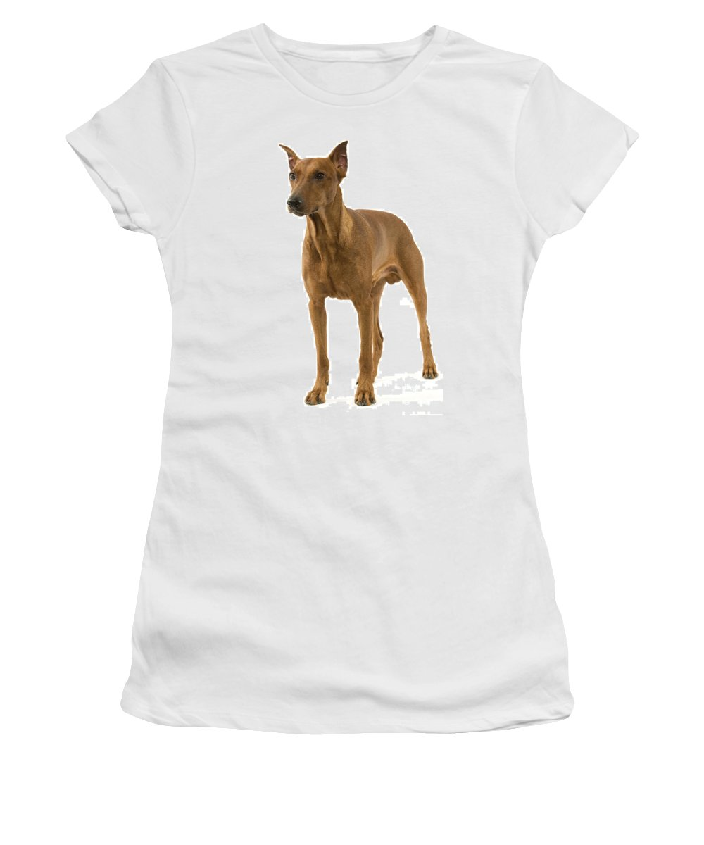 German Pinscher Women's T-Shirt (Athletic Fit) featuring the photograph German Or Standard Pinscher by Jean-Michel Labat