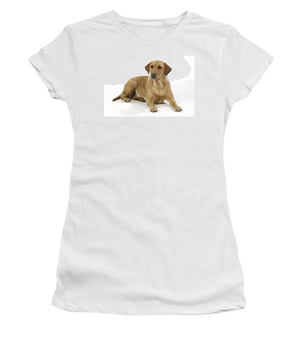 Labrador Retriever Women's T-Shirt (Athletic Fit) featuring the photograph Yellow Labrador Retriever by John Daniels