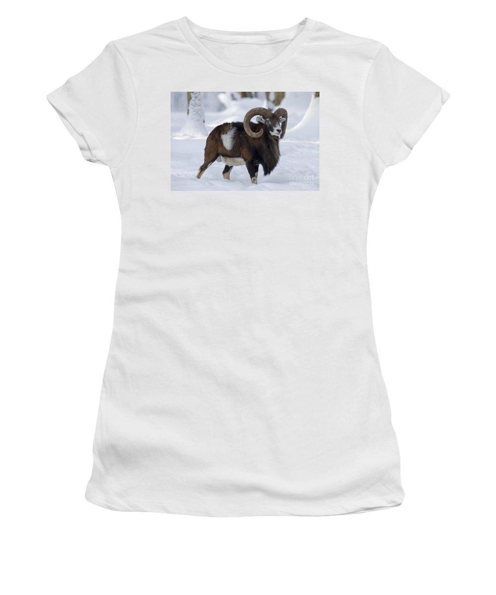 European Mouflon Women's T-Shirt featuring the photograph 110714p271 by Arterra Picture Library