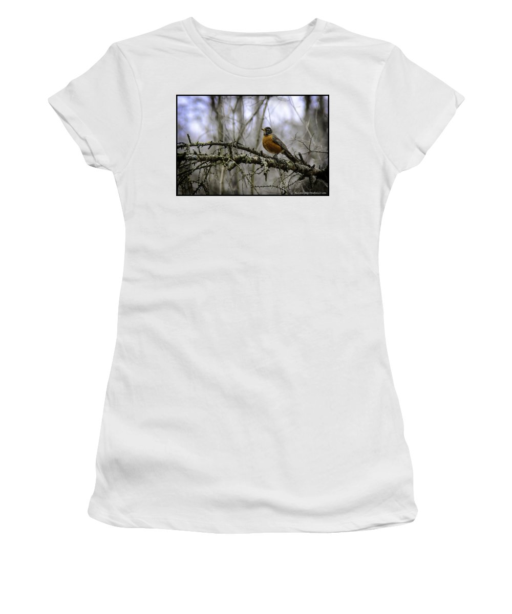 Usa Women's T-Shirt (Athletic Fit) featuring the photograph 1st Robin Of Spring by LeeAnn McLaneGoetz McLaneGoetzStudioLLCcom
