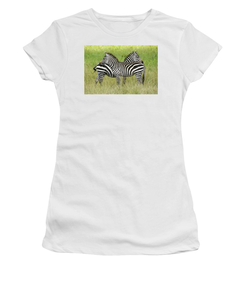 Africa Women's T-Shirt (Athletic Fit) featuring the photograph Crisscross Stripes by Michele Burgess
