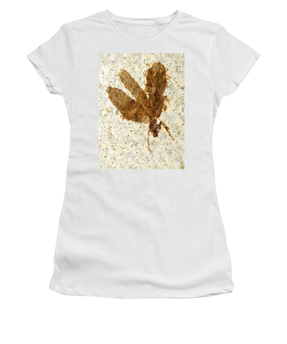 Nature Women's T-Shirt featuring the photograph Insect Fossil by Millard H. Sharp