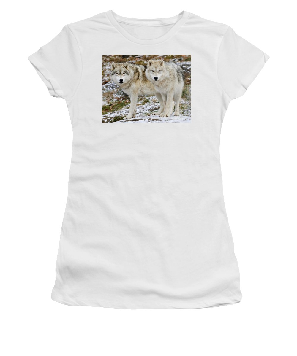 Arctic Wolf Photography Women's T-Shirt (Athletic Fit) featuring the photograph Arctic Wolves by Wolves Only