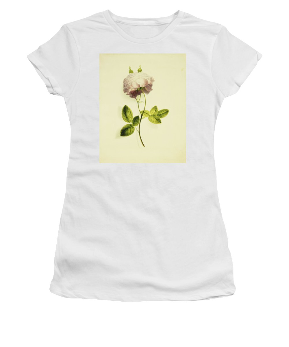 Biology Women's T-Shirt (Athletic Fit) featuring the painting A Pink Rose by James Holland